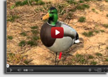 DU-TV Better Waterfowling Tip