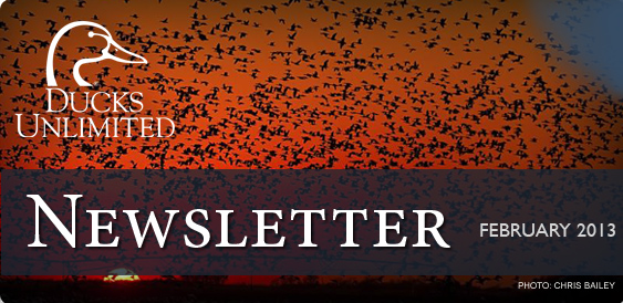 Ducks Unlimited Newsletter: February 2013