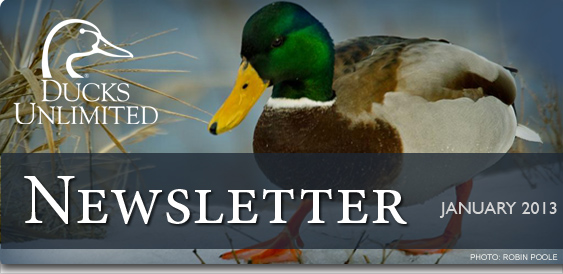 Ducks Unlimited Newsletter: January 2013