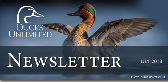 Ducks Unlimited Newsletter: July 2013