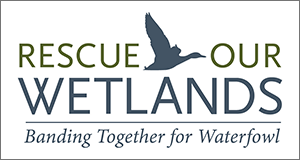 Rescue Our Wetlands