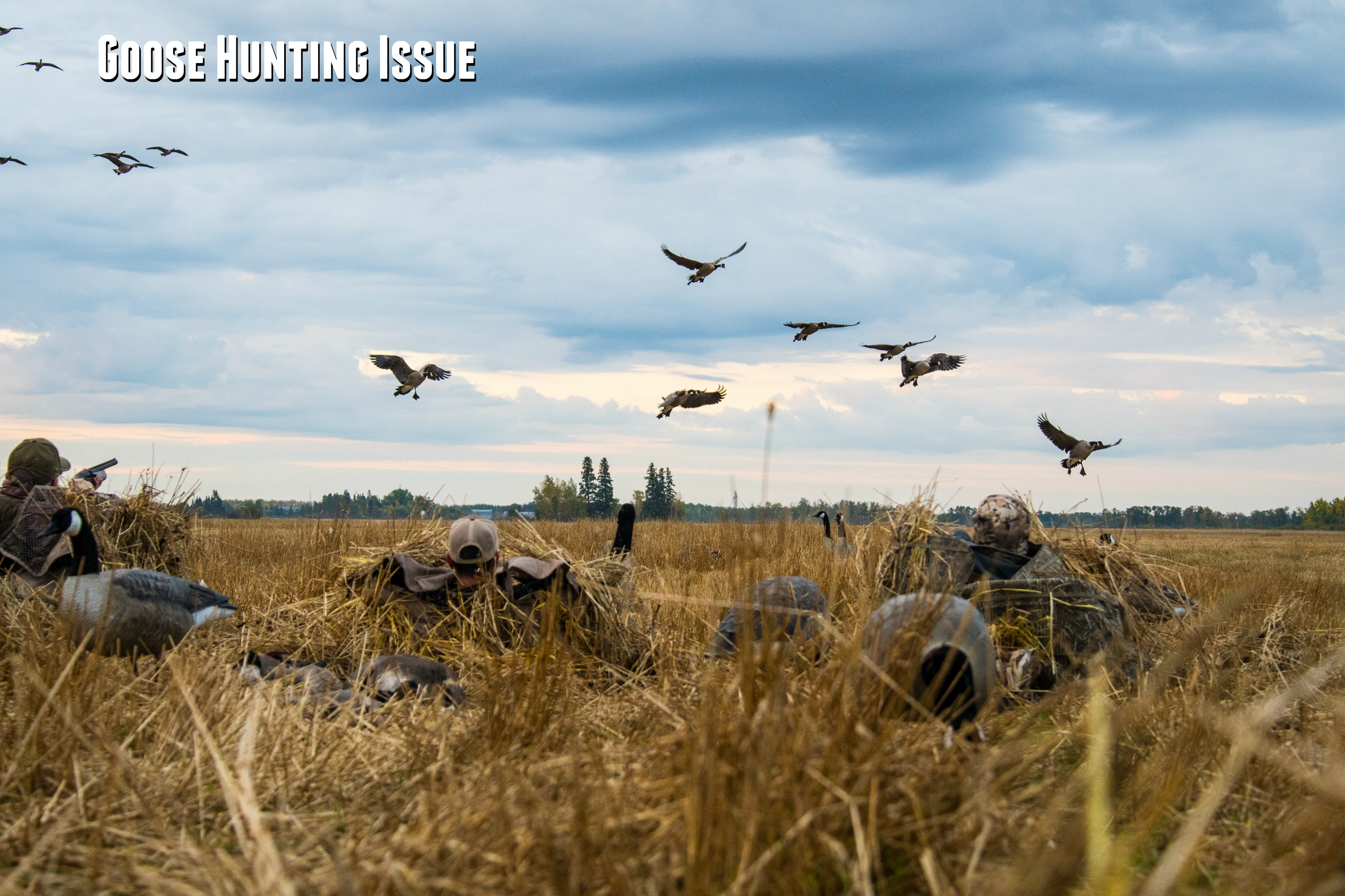The Goose Hunting Issue: November 2017